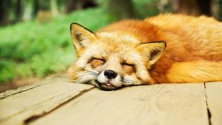 夜勤明け 睡眠